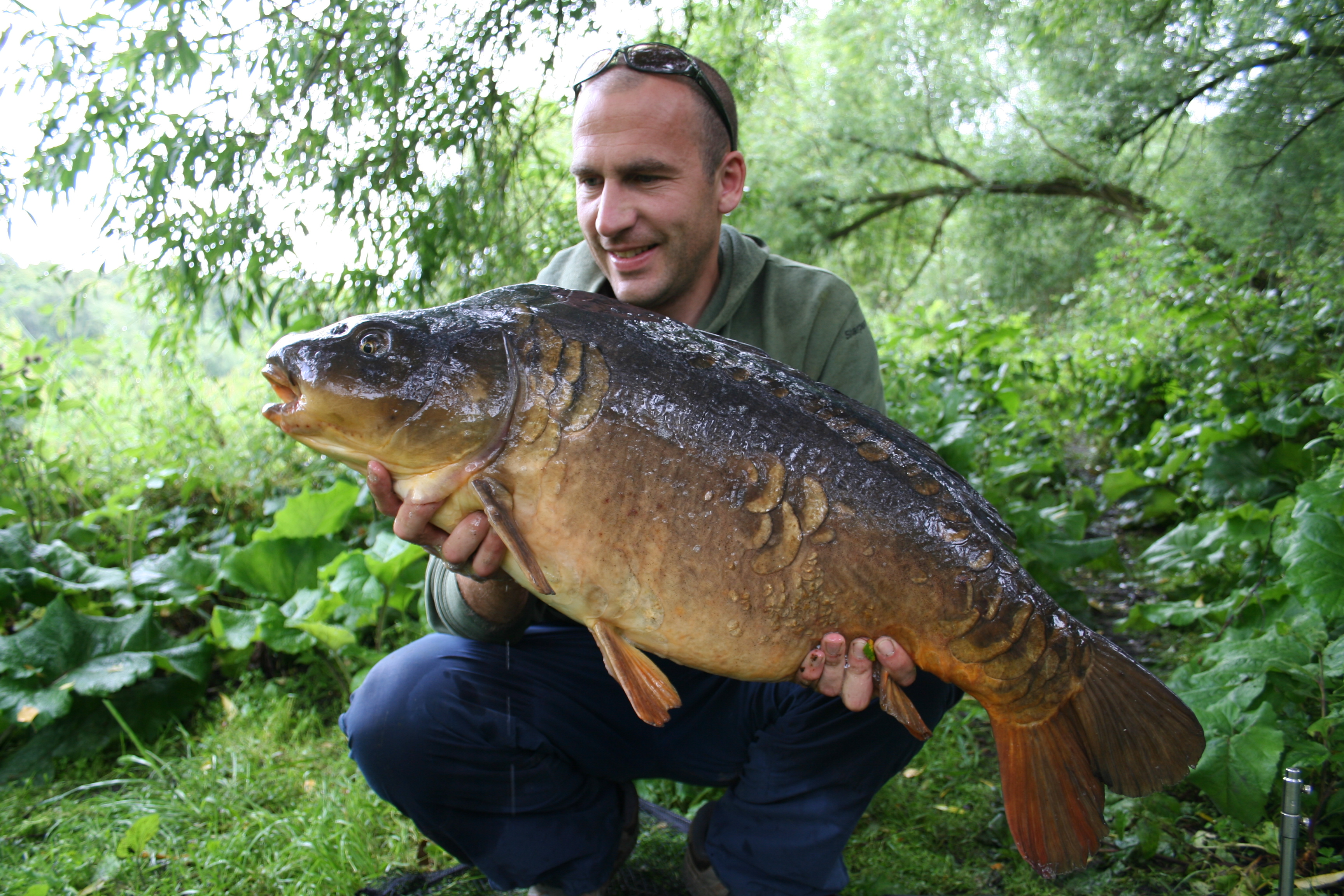 this-nice-old-english-carp-went-two-years-uncaught-before-i-landed-it-on-this-occasion
